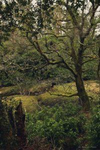 Glengariff Woods Nature Reserve
